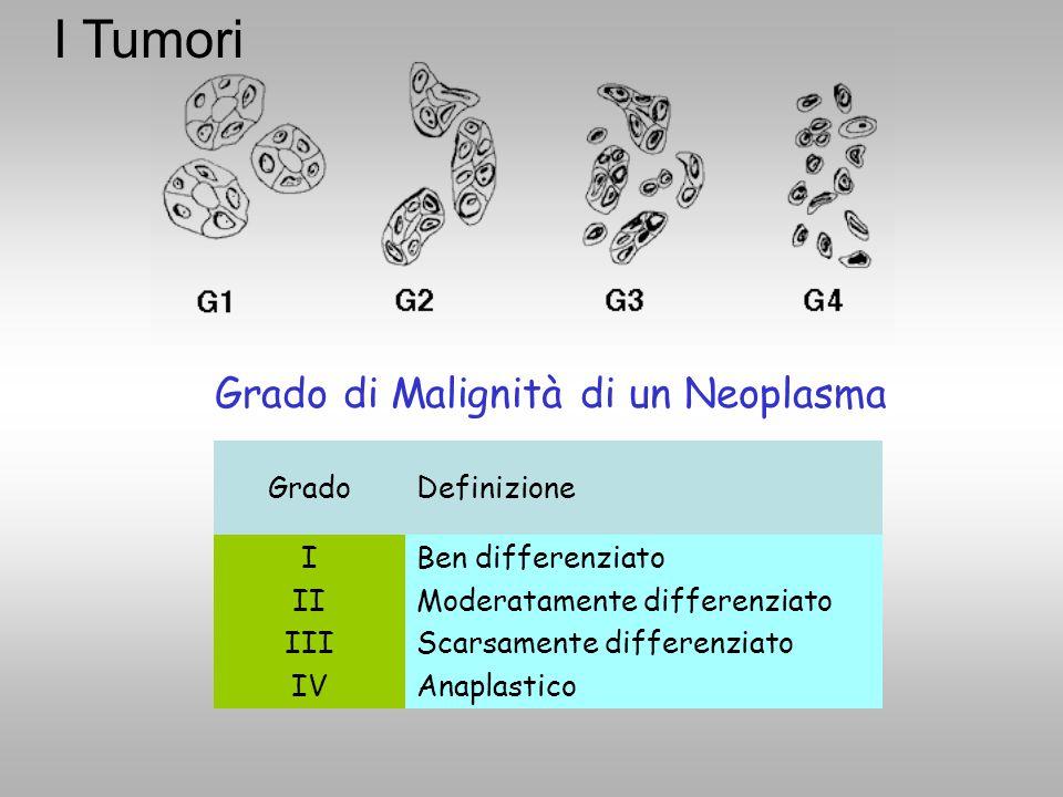 Grado di Malignità di un Neoplasma GradoDefinizione I II III IV Ben differenziato Moderatamente differenziato Scarsamente differenziato Anaplastico I