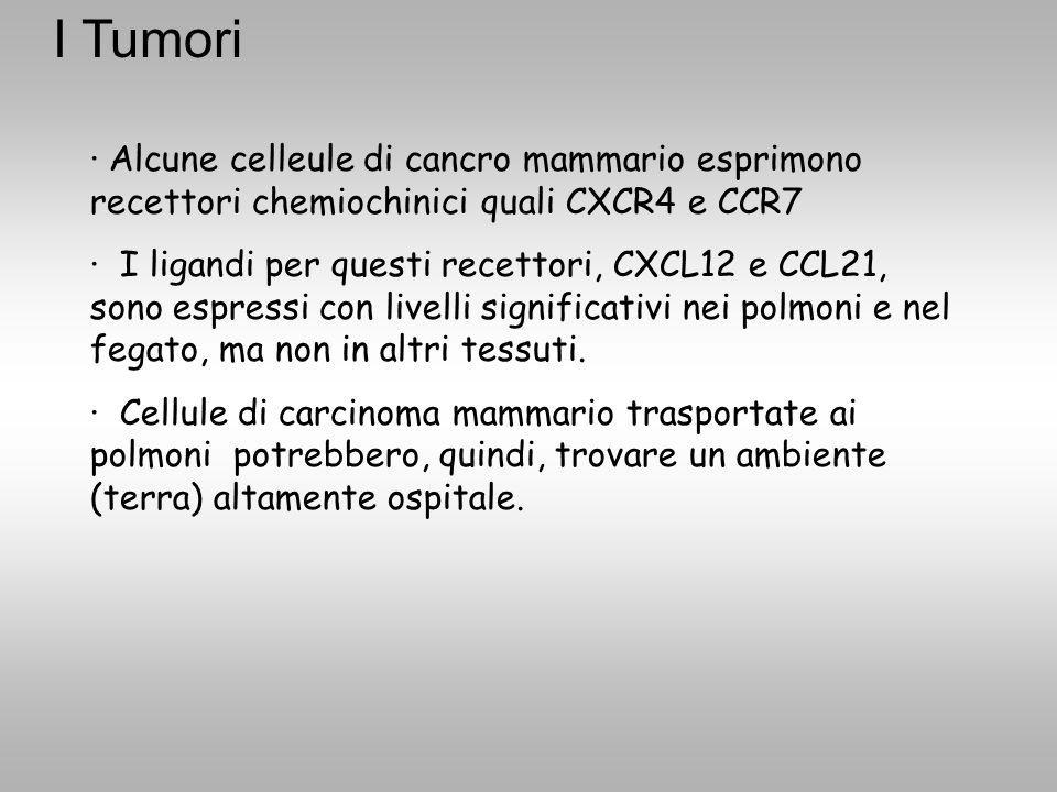 · Alcune celleule di cancro mammario esprimono recettori chemiochinici quali CXCR4 e CCR7 · I ligandi per questi recettori, CXCL12 e CCL21, sono espre