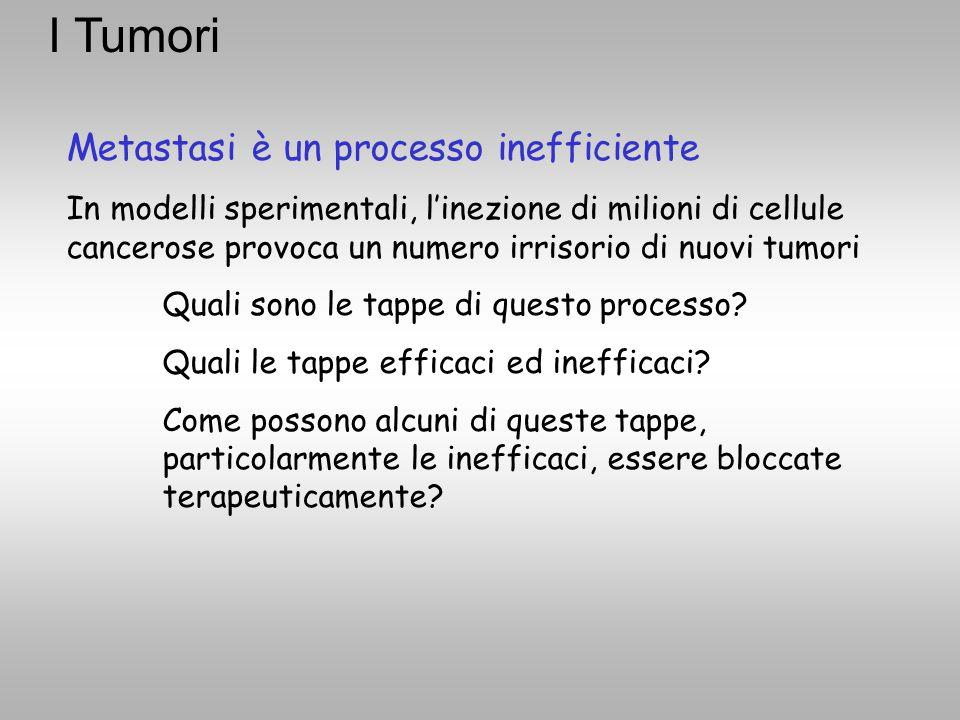 Metastasi è un processo inefficiente In modelli sperimentali, l'inezione di milioni di cellule cancerose provoca un numero irrisorio di nuovi tumori Q