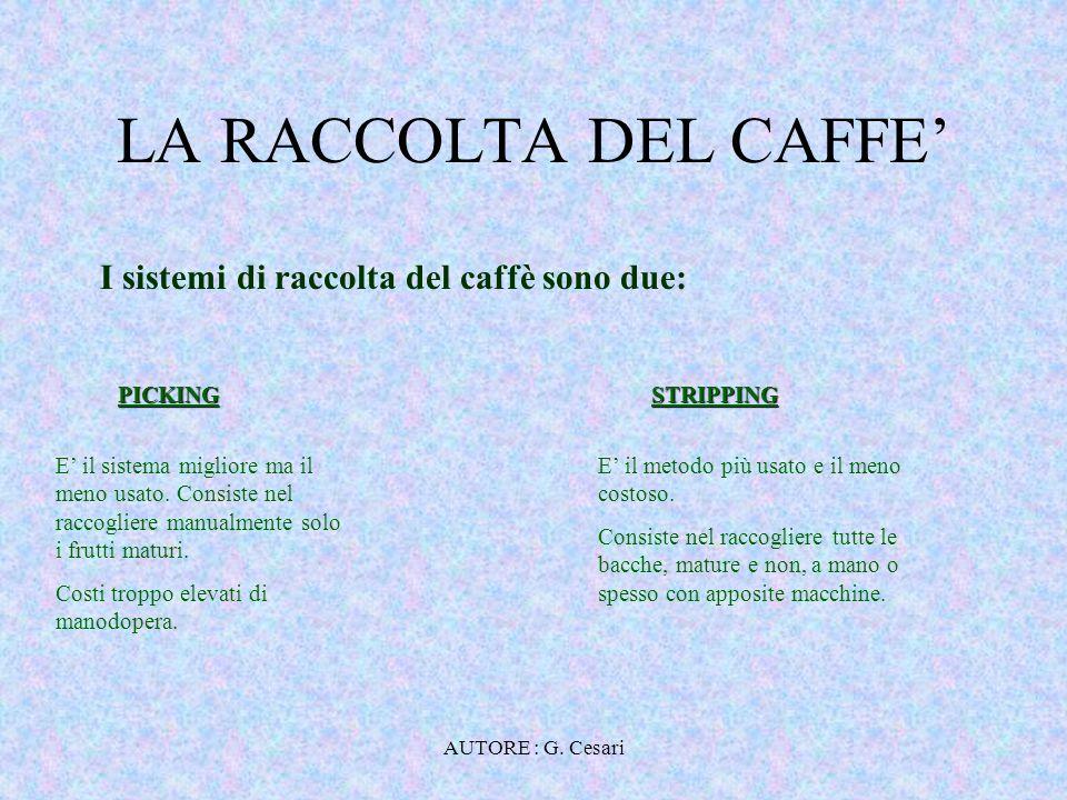 AUTORE : G. Cesari RACCOLTA: PICKING RACCOLTA MANUALE