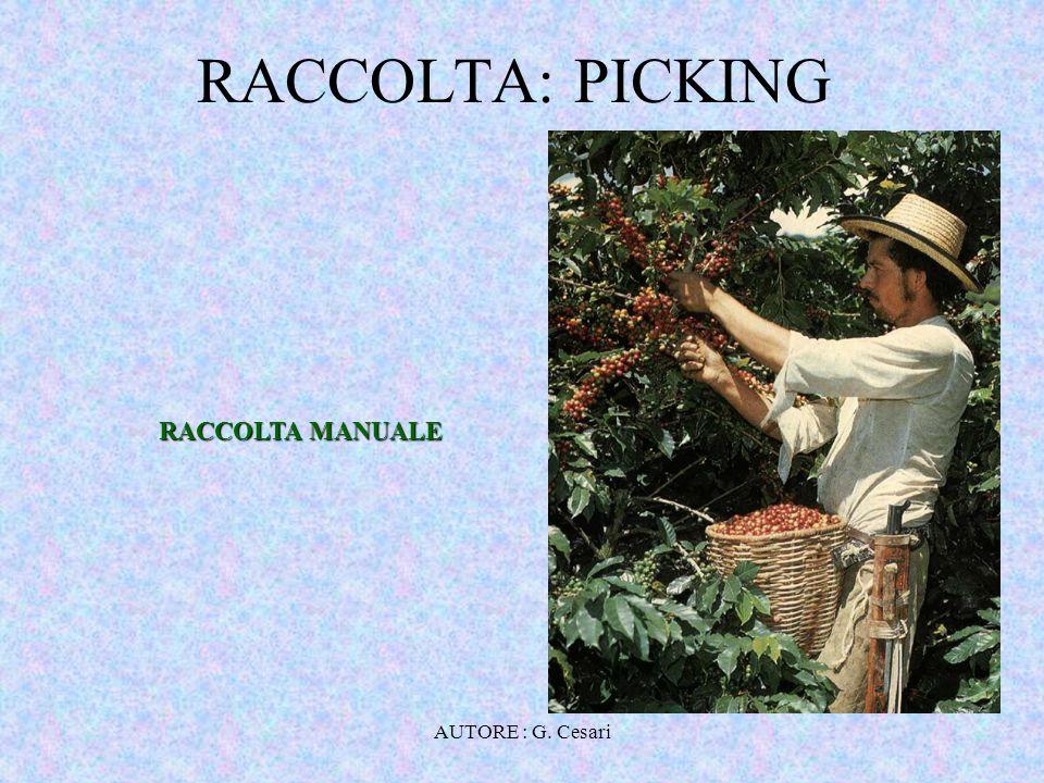 AUTORE : G. Cesari RACCOLTA: STRIPPING RACCOLTA MECCANIZZATA