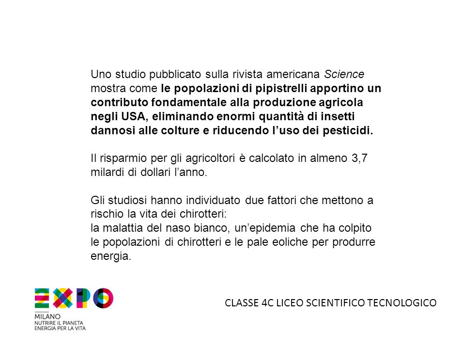 5°B LICEO SCIENTIFICO TECNOLOGICO La colonia riproduttiva di Vespertilio smarginato più grande d Europa a Zelata (Pavia) è stata scoperta l estate scorsa in un luogo di culto nei pressi della parrocchia B.