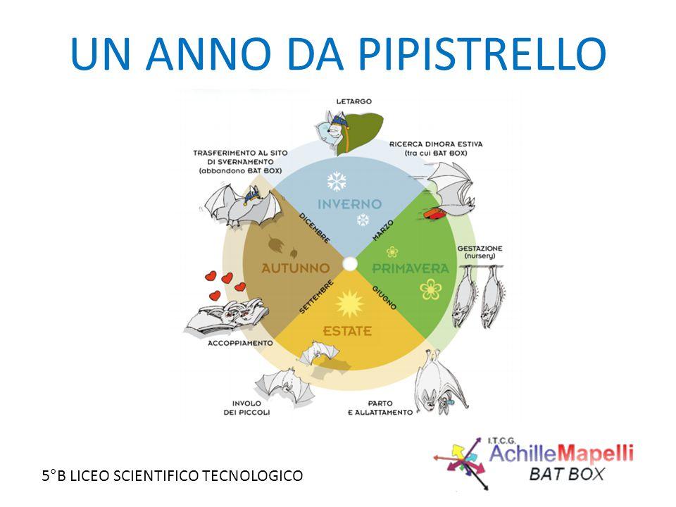 5°B LICEO SCIENTIFICO TECNOLOGICO UN ANNO DA PIPISTRELLO
