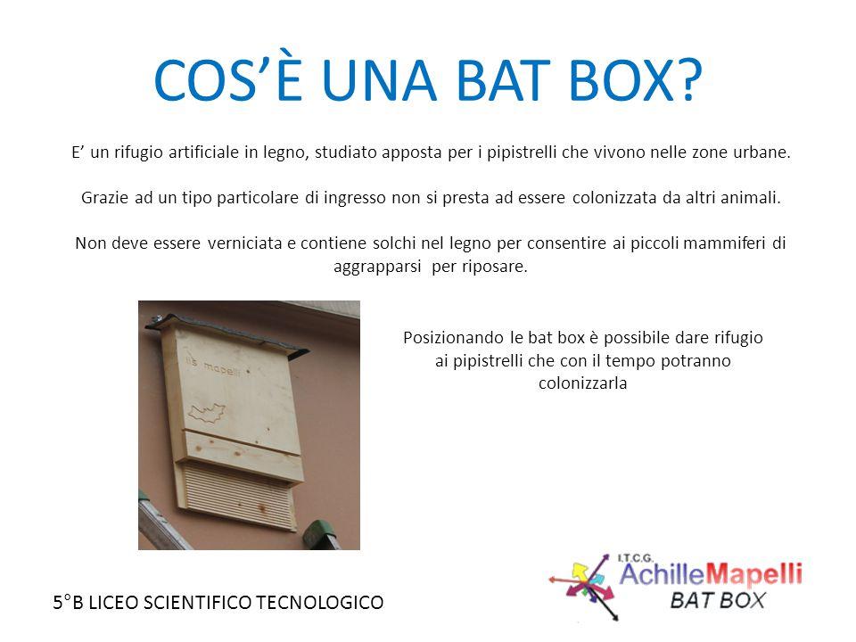 COS'È UNA BAT BOX? E' un rifugio artificiale in legno, studiato apposta per i pipistrelli che vivono nelle zone urbane. Grazie ad un tipo particolare