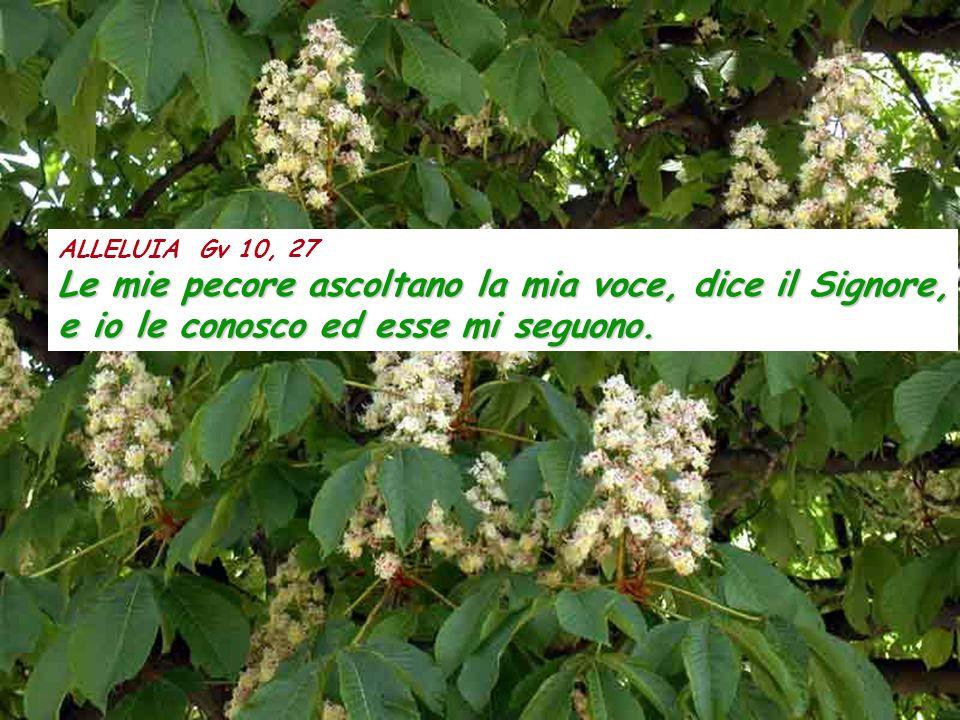 ALLELUIA Gv 10, 27 Le mie pecore ascoltano la mia voce, dice il Signore, e io le conosco ed esse mi seguono.