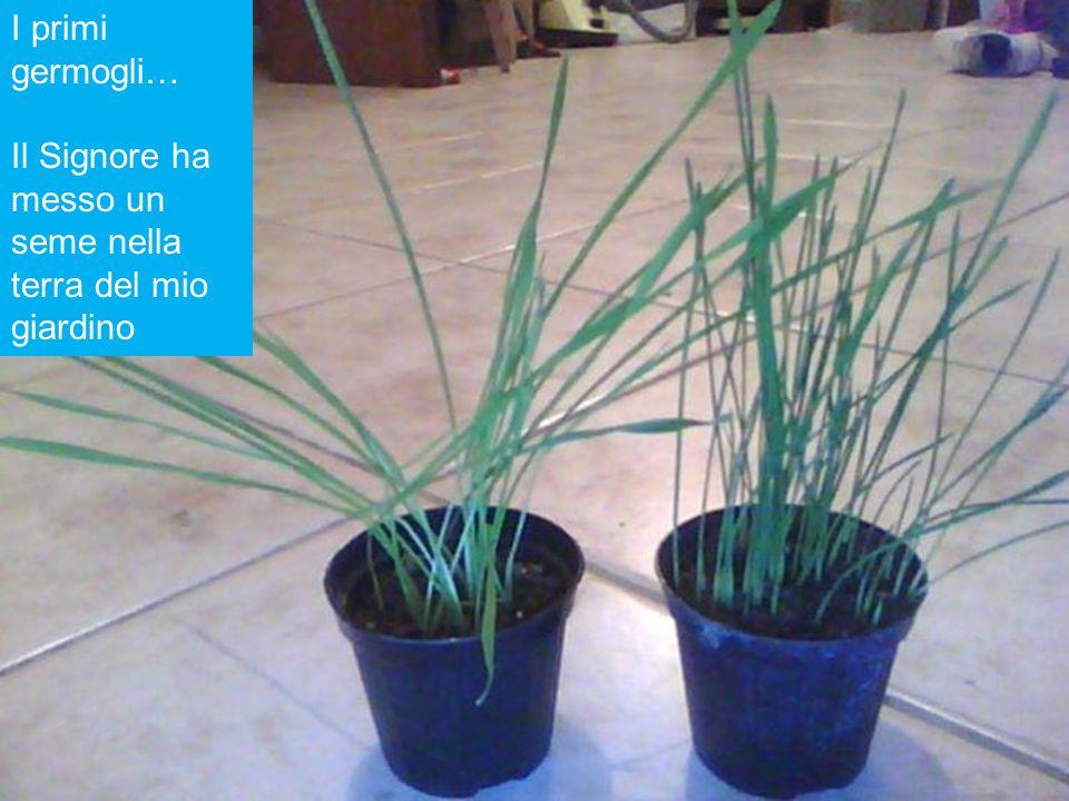 I primi germogli… Il Signore ha messo un seme nella terra del mio giardino
