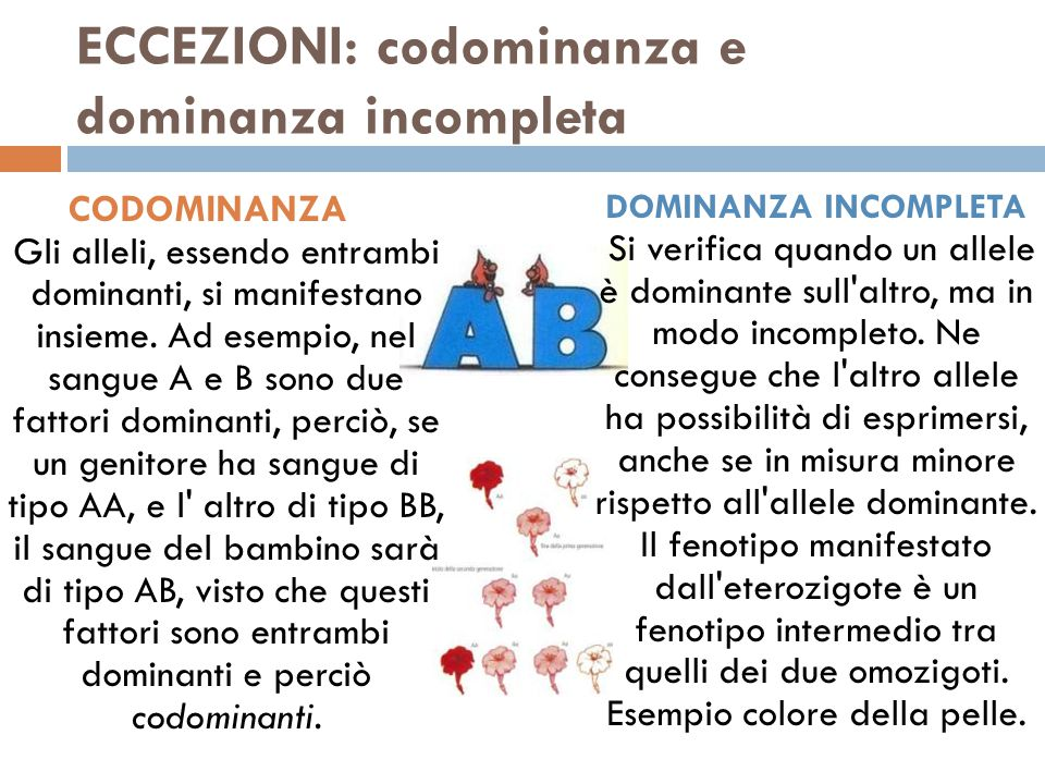 ECCEZIONI: codominanza e dominanza incompleta CODOMINANZA Gli alleli, essendo entrambi dominanti, si manifestano insieme. Ad esempio, nel sangue A e B