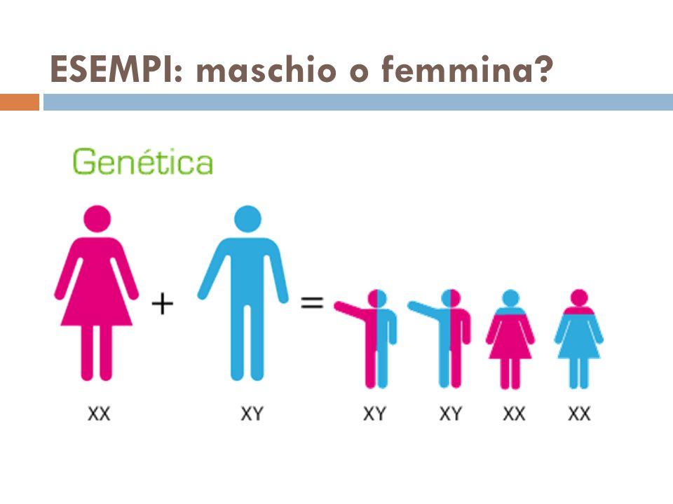 ESEMPI: maschio o femmina?