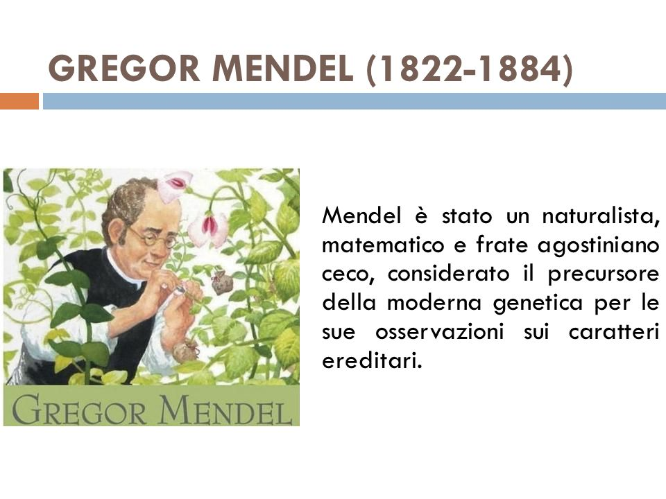 GREGOR MENDEL (1822-1884) Mendel è stato un naturalista, matematico e frate agostiniano ceco, considerato il precursore della moderna genetica per le
