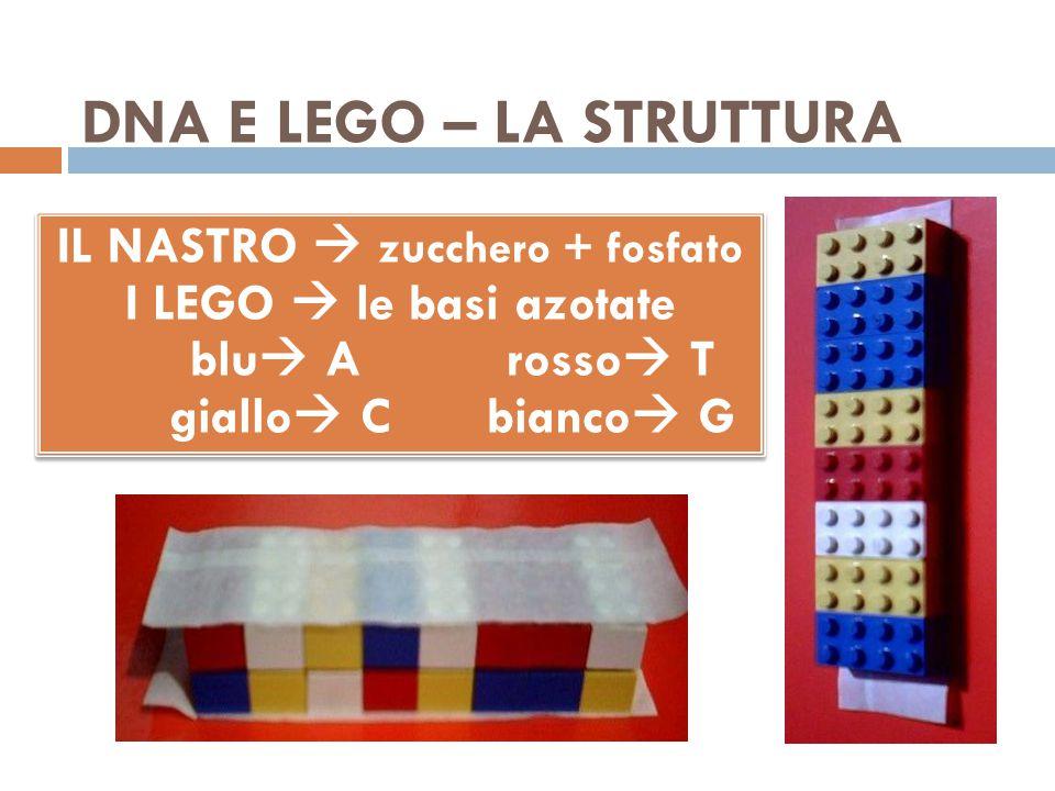 DNA E LEGO – LA STRUTTURA IL NASTRO  zucchero + fosfato I LEGO  le basi azotate blu  A rosso  T giallo  C bianco  G IL NASTRO  zucchero + fosfa
