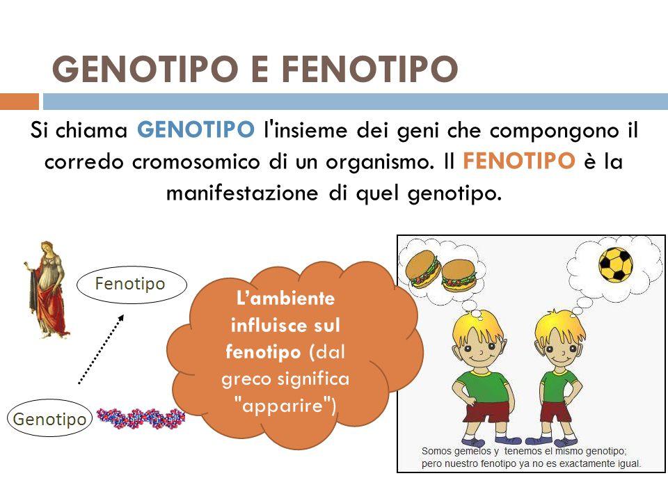 GENOTIPO E FENOTIPO Si chiama GENOTIPO l'insieme dei geni che compongono il corredo cromosomico di un organismo. Il FENOTIPO è la manifestazione di qu
