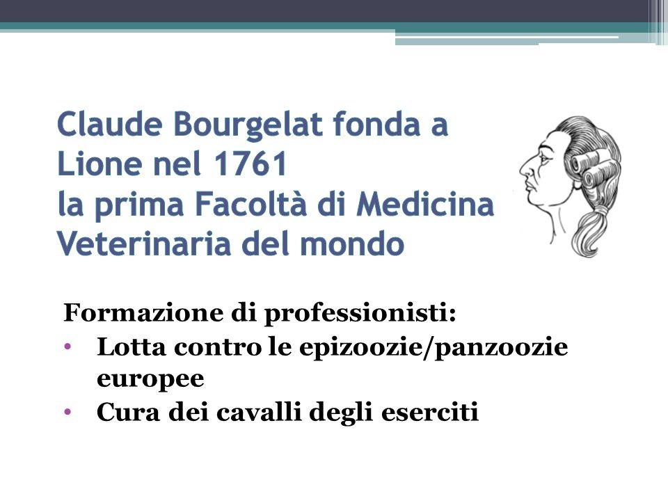 Formazione di professionisti: Lotta contro le epizoozie/panzoozie europee Cura dei cavalli degli eserciti