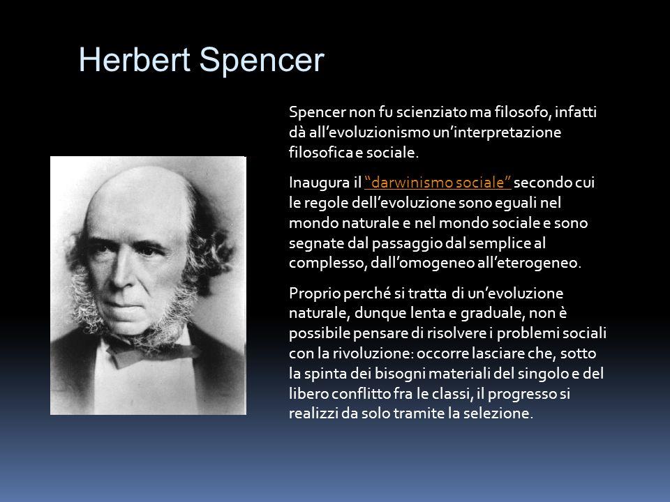 """Herbert Spencer Spencer non fu scienziato ma filosofo, infatti dà all'evoluzionismo un'interpretazione filosofica e sociale. Inaugura il """"darwinismo s"""