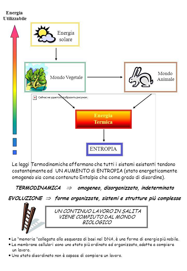 Energia solare Mondo Vegetale Mondo Animale Energia Termica ENTROPIA Energia Utilizzabile Le leggi Termodinamiche affermano che tutti i sistemi esistenti tendono costantemente ad UN AUMENTO di ENTROPIA (stato energeticamente omogeneo sia come contenuto Entalpia che come grado di disordine).