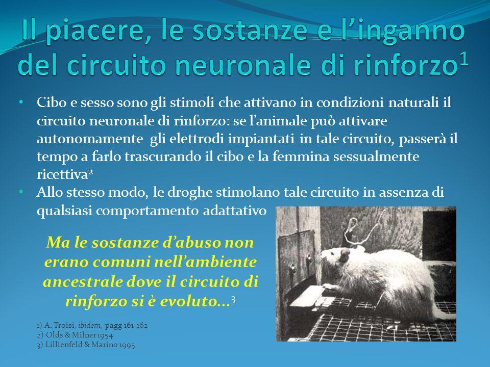 Cibo e sesso sono gli stimoli che attivano in condizioni naturali il circuito neuronale di rinforzo: se l'animale può attivare autonomamente gli elett