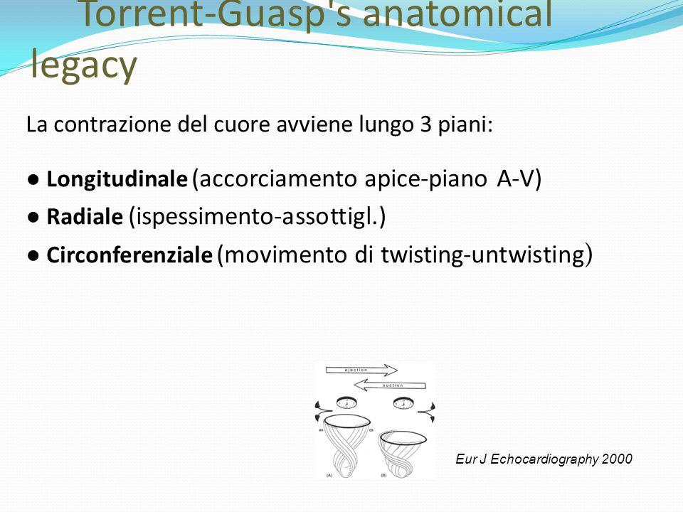 Torrent-Guasp's anatomical legacy La contrazione del cuore avviene lungo 3 piani: ● Longitudinale (accorciamento apice-piano A-V) ● Radiale (ispessime