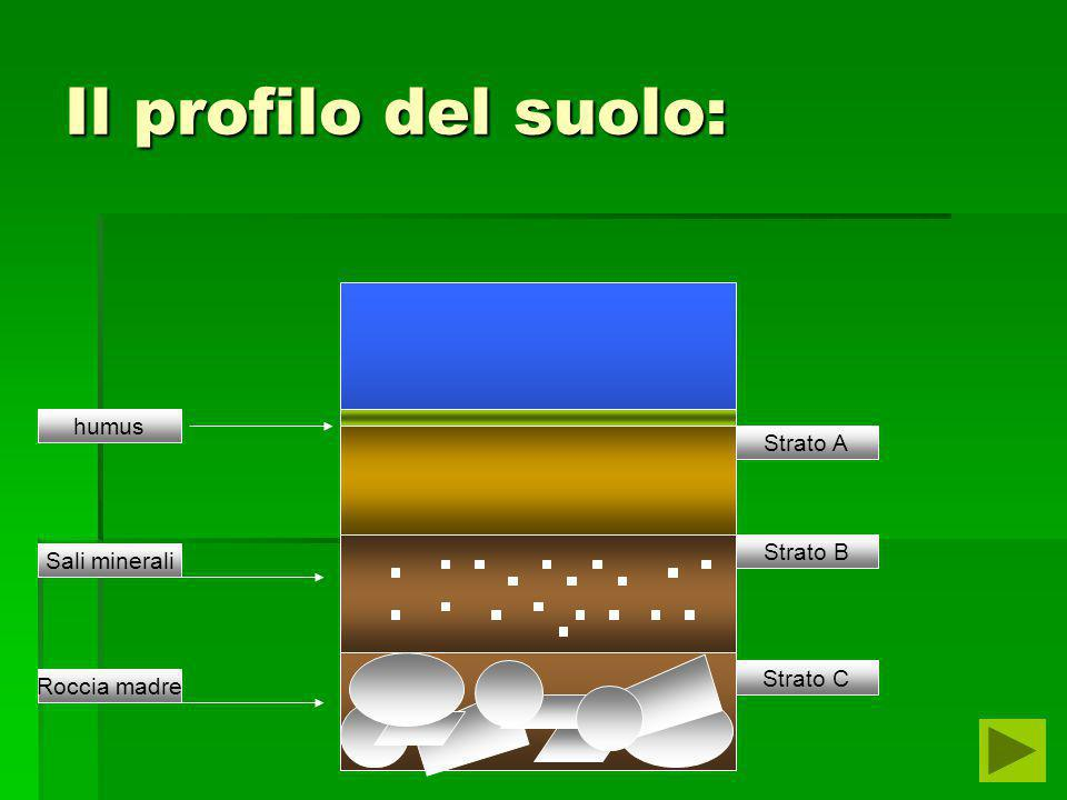I° ESPERIMENTO  SCOPO:determinare la decomposizione di oggetti di natura diversa  MATERIALI:3 vaschette contente terreno,un mandarino,un tappo,e un