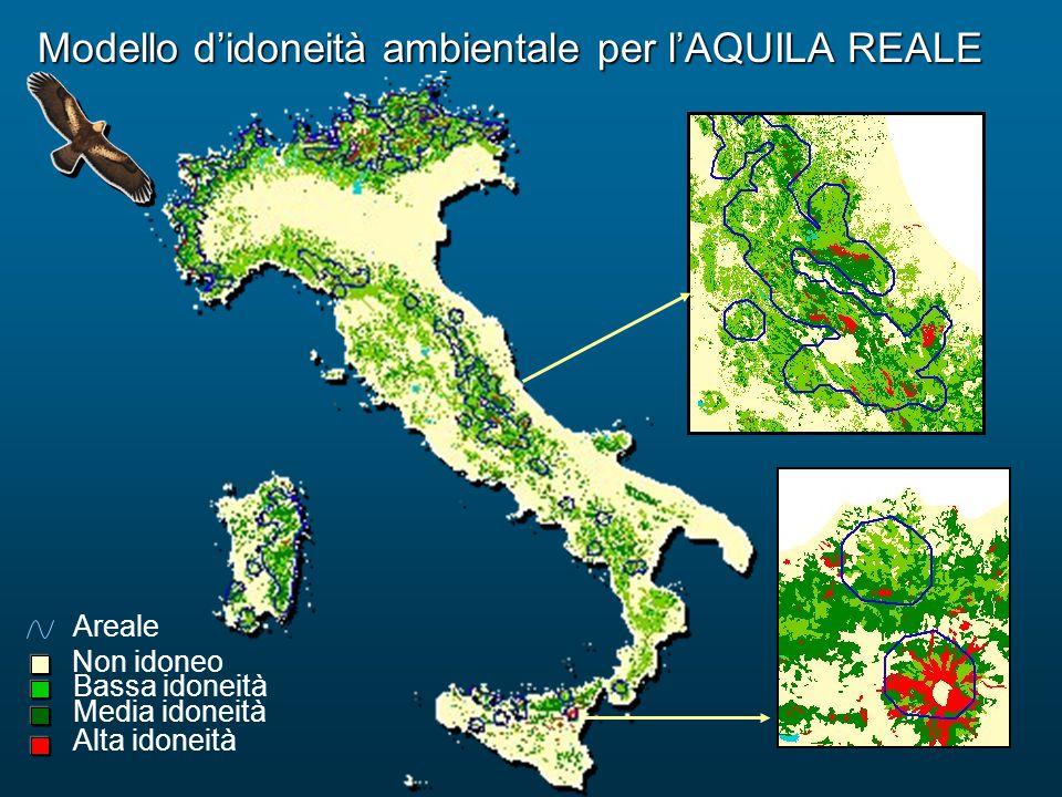 Modello d'idoneità ambientale per l'AQUILA REALE Bassa idoneità Alta idoneità Media idoneità Non idoneo Areale