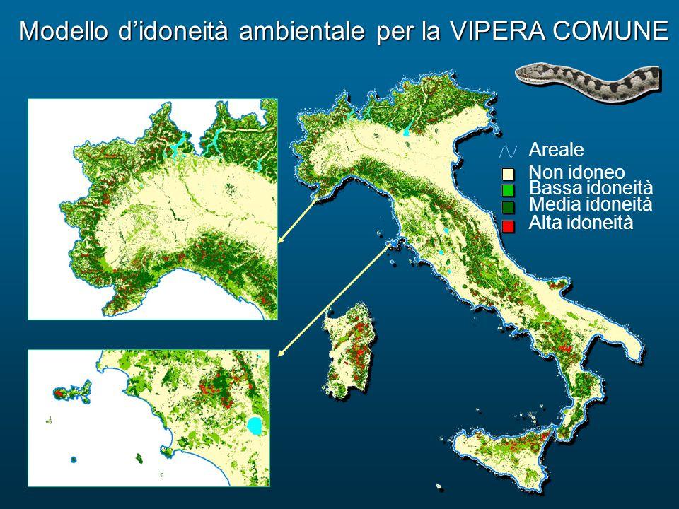 Modello d'idoneità ambientale per la VIPERA COMUNE Bassa idoneità Alta idoneità Media idoneità Non idoneo Areale