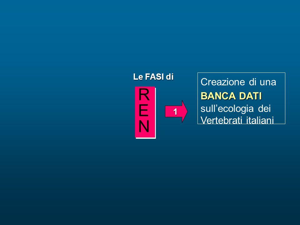 BANCA DATI Creazione di una BANCA DATI sull'ecologia dei Vertebrati italiani Le FASI di 1 RENREN RENREN