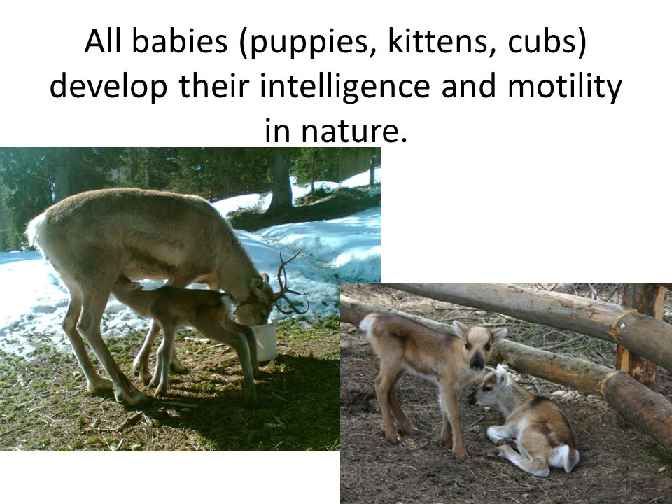 All babies (puppies, kittens, cubs) develop their intelligence and motility in nature.