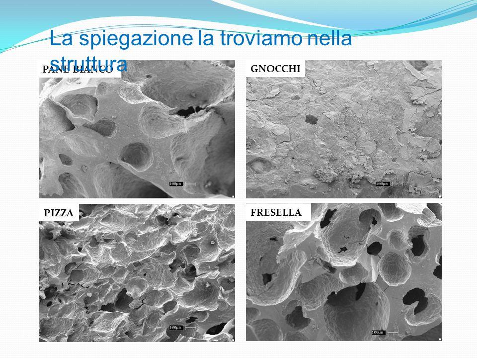 PANE BIANCO GNOCCHI PIZZA FRESELLA La spiegazione la troviamo nella struttura