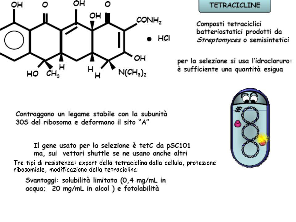 Produzione di fosfotransferasi determina resistenza fosforilando kanamicina in posizione 3' sfruttando ATP.