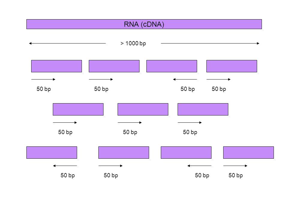 RNA (cDNA) > 1000 bp 50 bp