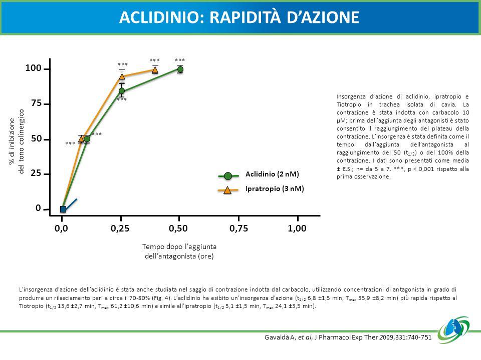 ACLIDINIO: RAPIDITÀ D'AZIONE Aclidinio (2 nM) Ipratropio (3 nM) Tiotropio (6 nM) Tempo dopo l'aggiunta dell'antagonista (ore) % di inibizione del tono colinergico *** 1,000,750,50 0,25 0 25 50 75 100 0,0 Insorgenza d'azione di aclidinio, ipratropio e Tiotropio in trachea isolata di cavia.