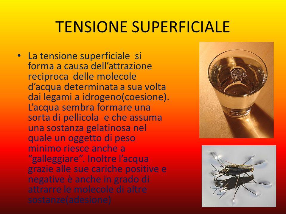 TENSIONE SUPERFICIALE La tensione superficiale si forma a causa dell'attrazione reciproca delle molecole d'acqua determinata a sua volta dai legami a