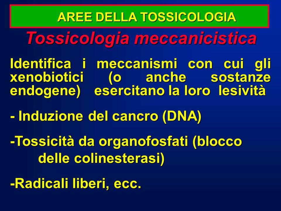 Tossicologia meccanicistica Identifica i meccanismi con cui gli xenobiotici (o anche sostanze endogene)esercitano la loro lesività - Induzione del can