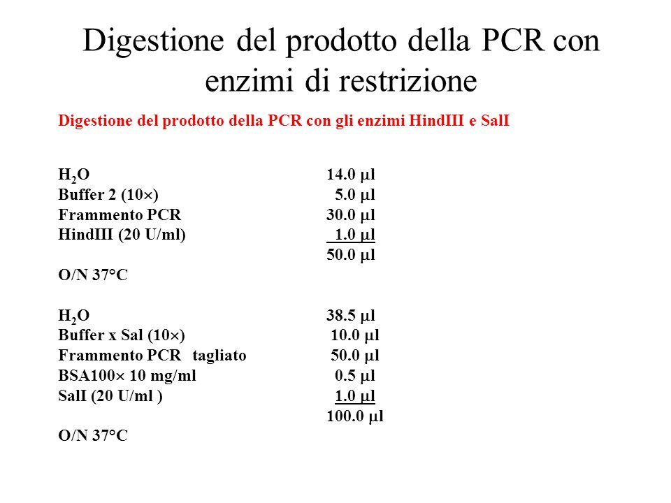 Digestione del prodotto della PCR con enzimi di restrizione Digestione del prodotto della PCR con gli enzimi HindIII e SalI H 2 O14.0  l Buffer 2 (10  ) 5.0  l Frammento PCR30.0  l HindIII (20 U/ml) 1.0  l 50.0  l O/N 37°C H 2 O38.5  l Buffer x Sal (10  ) 10.0  l Frammento PCRtagliato 50.0  l BSA100  10 mg/ml 0.5  l SalI (20 U/ml ) 1.0  l 100.0  l O/N 37°C