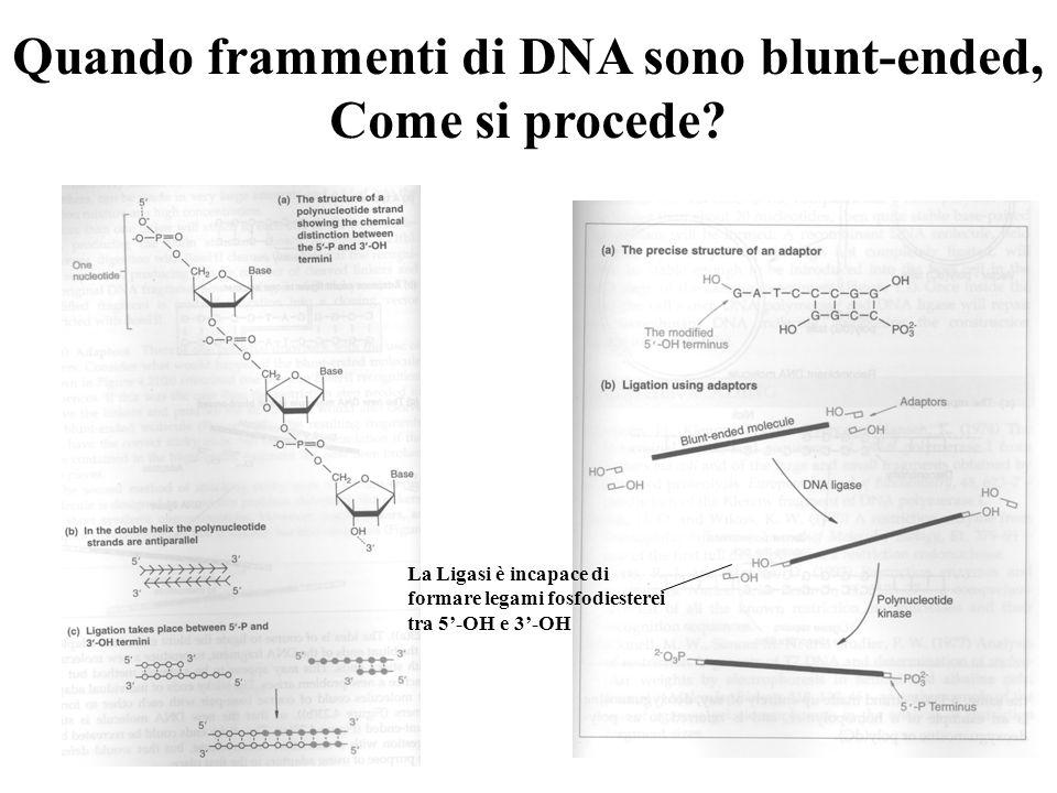 Quando frammenti di DNA sono blunt-ended, Come si procede.