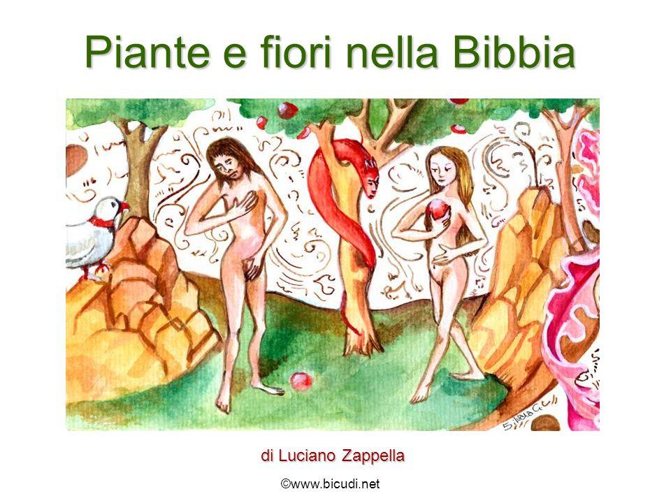 Piante e fiori nella Bibbia di Luciano Zappella ©www.bicudi.net