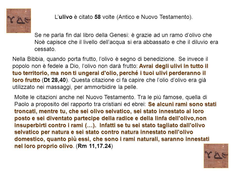L'ulivo è citato 58 volte (Antico e Nuovo Testamento). Se ne parla fin dal libro della Genesi: è grazie ad un ramo d'olivo che Noè capisce che il live