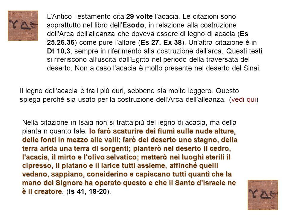 L'Antico Testamento cita 29 volte l'acacia. Le citazioni sono soprattutto nel libro dell'Esodo, in relazione alla costruzione dell'Arca dell'alleanza
