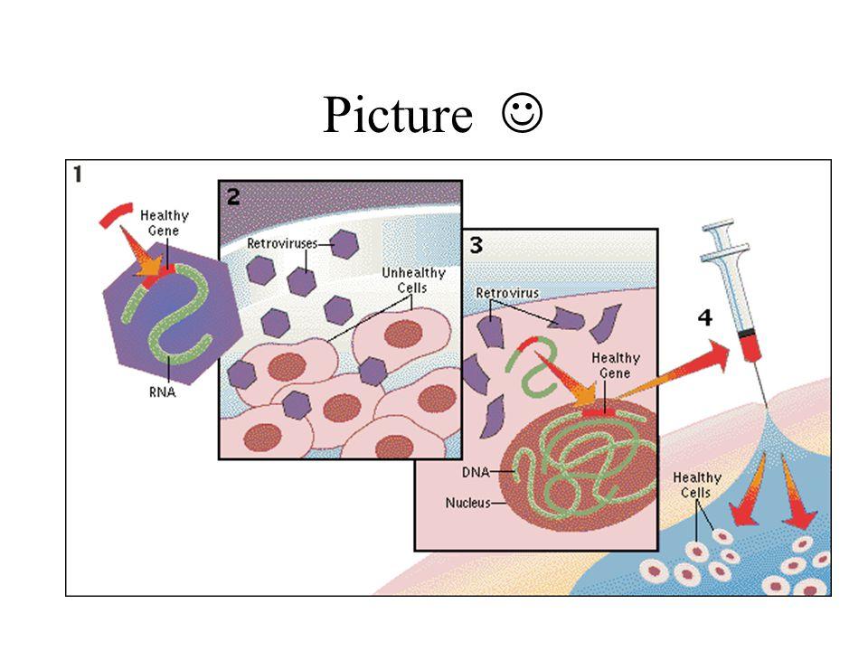Viruses Si replicano inserendo il loro DNA nella cellula ospite La terapia genica li puo' usare per inserire geni che codificano per la caratteristica desiderata Quattro tipi: