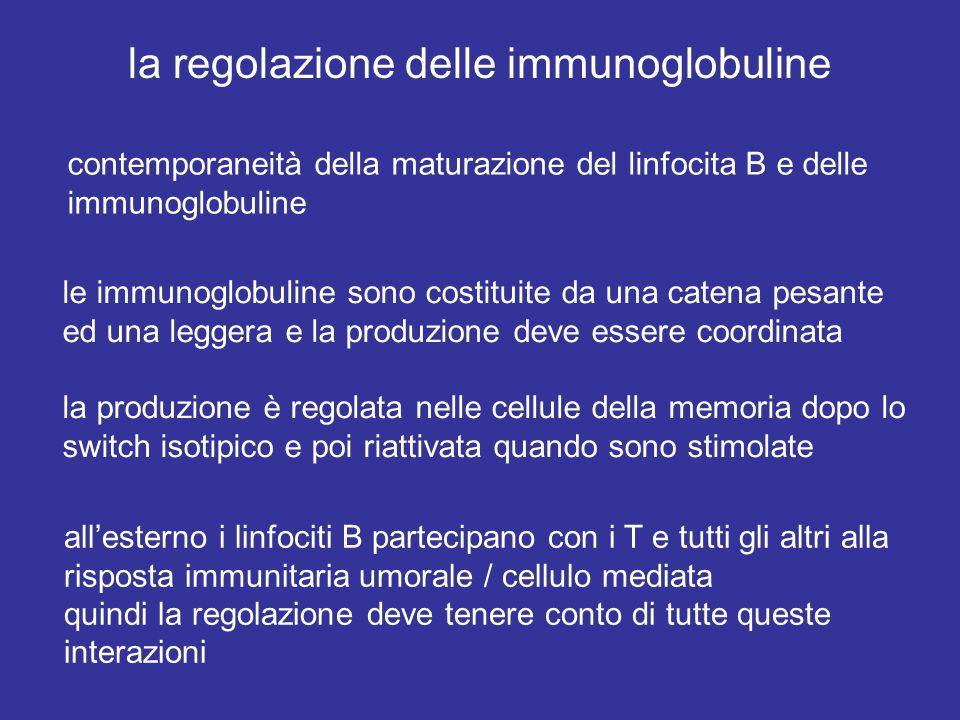 la regolazione delle immunoglobuline contemporaneità della maturazione del linfocita B e delle immunoglobuline le immunoglobuline sono costituite da una catena pesante ed una leggera e la produzione deve essere coordinata la produzione è regolata nelle cellule della memoria dopo lo switch isotipico e poi riattivata quando sono stimolate all'esterno i linfociti B partecipano con i T e tutti gli altri alla risposta immunitaria umorale / cellulo mediata quindi la regolazione deve tenere conto di tutte queste interazioni