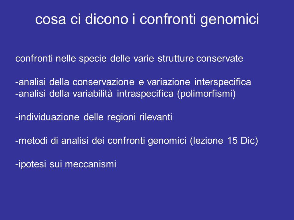 cosa ci dicono i confronti genomici confronti nelle specie delle varie strutture conservate -analisi della conservazione e variazione interspecifica -analisi della variabilità intraspecifica (polimorfismi) -individuazione delle regioni rilevanti -metodi di analisi dei confronti genomici (lezione 15 Dic) -ipotesi sui meccanismi