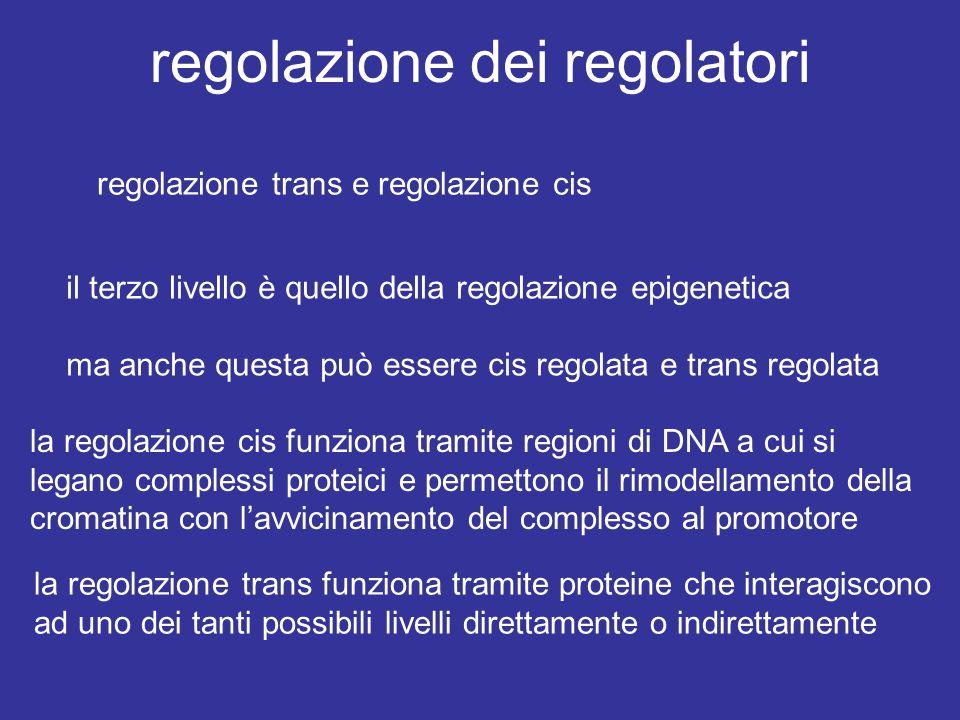 regolazione dei regolatori regolazione trans e regolazione cis il terzo livello è quello della regolazione epigenetica ma anche questa può essere cis regolata e trans regolata la regolazione cis funziona tramite regioni di DNA a cui si legano complessi proteici e permettono il rimodellamento della cromatina con l'avvicinamento del complesso al promotore la regolazione trans funziona tramite proteine che interagiscono ad uno dei tanti possibili livelli direttamente o indirettamente