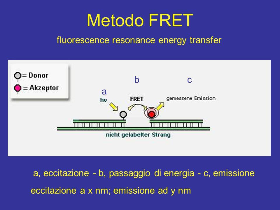 Metodo FRET a, eccitazione - b, passaggio di energia - c, emissione a bc fluorescence resonance energy transfer eccitazione a x nm; emissione ad y nm