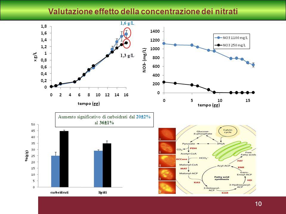 10 Aumento significativo di carboidrati dal 20±2% al 36±1% 1,6 g/L 1,3 g/L Valutazione effetto della concentrazione dei nitrati