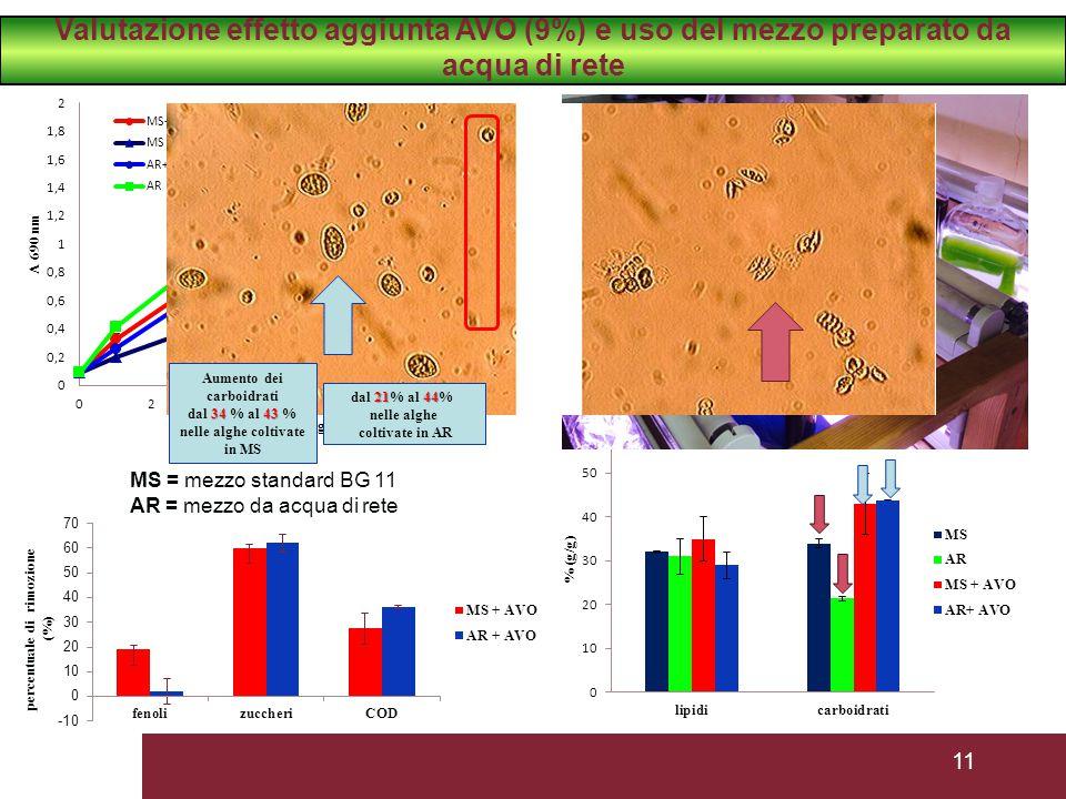 11 MS = mezzo standard BG 11 AR = mezzo da acqua di rete Aumento dei carboidrati 3443 dal 34 % al 43 % nelle alghe coltivate in MS 2144 dal 21% al 44% nelle alghe coltivate in AR Valutazione effetto aggiunta AVO (9%) e uso del mezzo preparato da acqua di rete