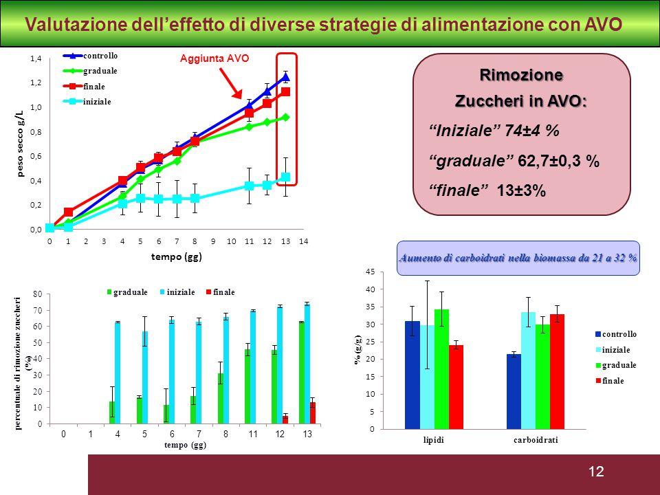 12 Aggiunta AVO Rimozione Zuccheri in AVO: Iniziale 74±4 % graduale 62,7±0,3 % finale 13±3% Aumento di carboidrati nella biomassa da 21 a 32 % Valutazione dell'effetto di diverse strategie di alimentazione con AVO