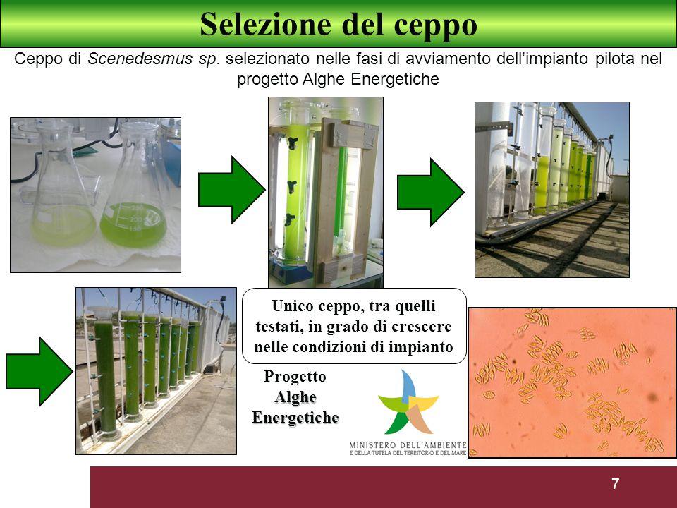 7 Unico ceppo, tra quelli testati, in grado di crescere nelle condizioni di impianto Alghe Energetiche Progetto Alghe Energetiche Selezione del ceppo Ceppo di Scenedesmus sp.
