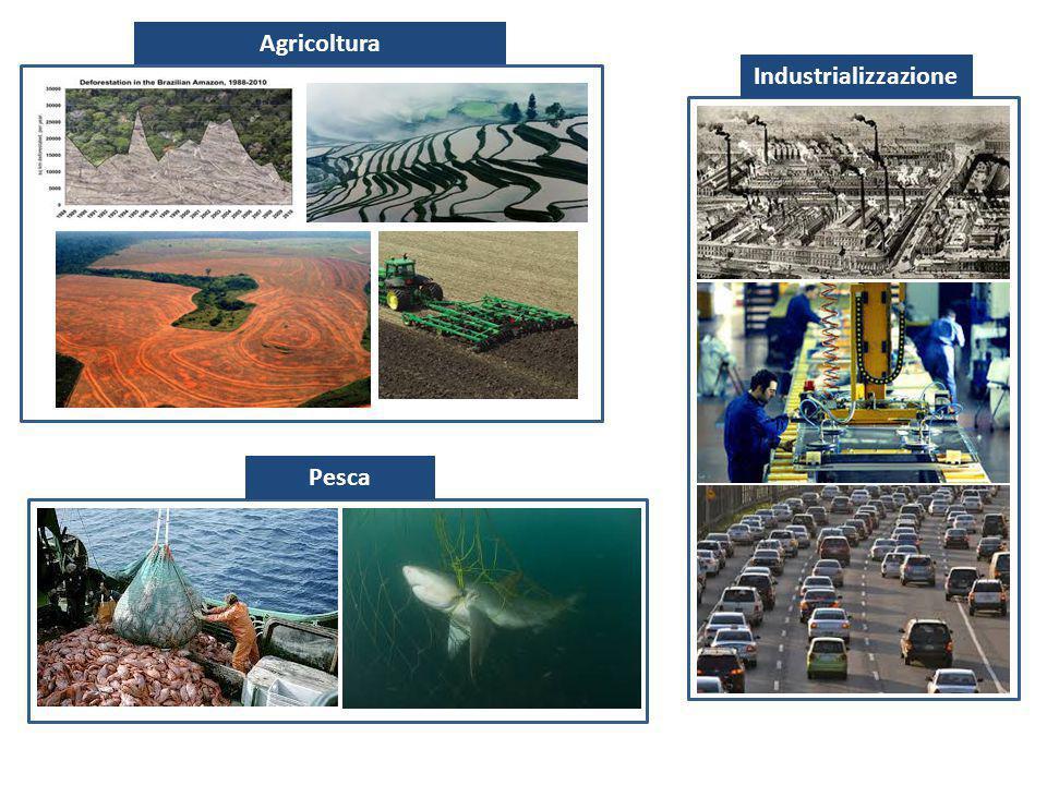 Agricoltura IndustrializzazionePesca