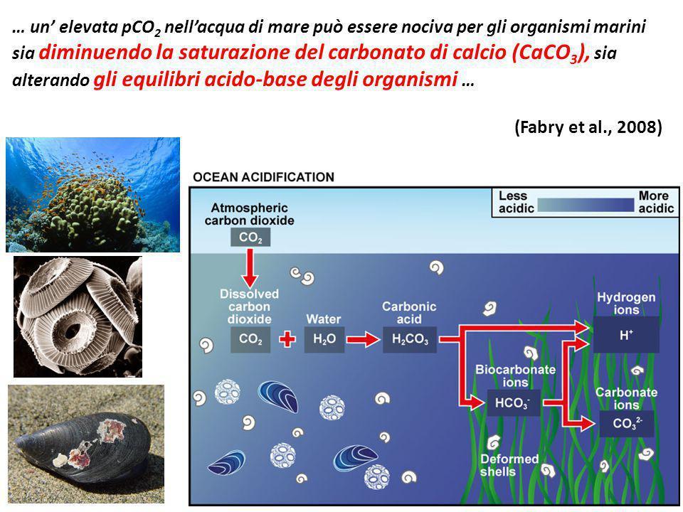 … un' elevata pCO 2 nell'acqua di mare può essere nociva per gli organismi marini sia diminuendo la saturazione del carbonato di calcio (CaCO 3 ), sia