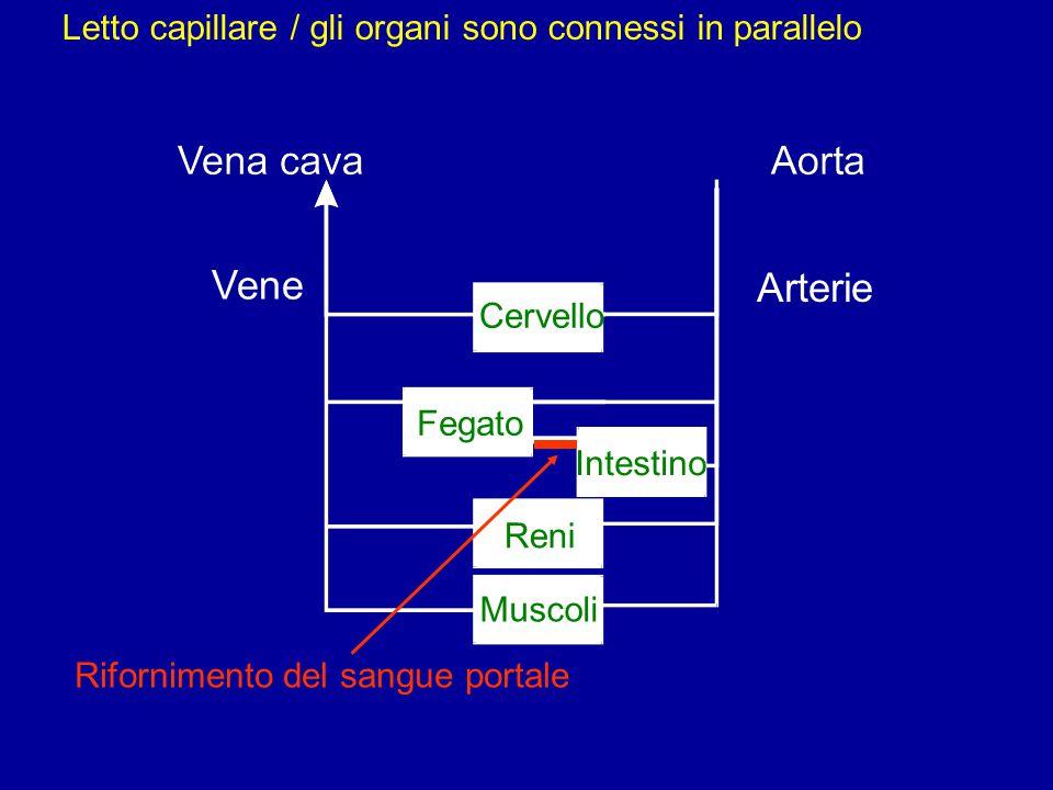 Vene Arterie Cervello Intestino Fegato Reni Muscoli Rifornimento del sangue portale Letto capillare / gli organi sono connessi in parallelo