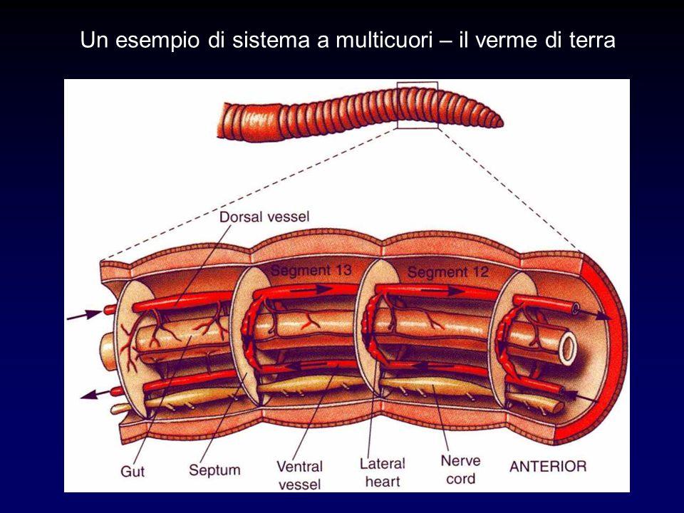 Un esempio di sistema a multicuori – il verme di terra