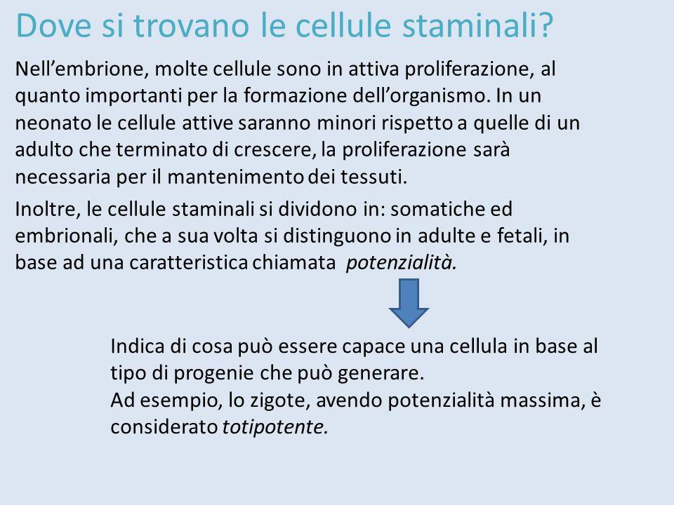 Le divisioni cellulari possono essere di due tipi:  SIMMETRICHE: hanno come risultato una clonazione cellulare.